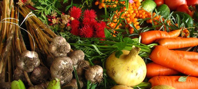 Aude: une exploitation agricole sauvée par le bio!